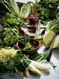Various Lettuces Fotodruck von  Teubner Foodfoto GmbH