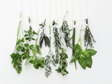 Various Fresh Herbs Hanging Up Photographic Print by Tanya Zouev