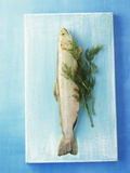Charr with Dill Photographic Print by Oliver Schwarzwald