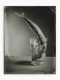 Mackerel in a Water Glass Photographic Print by Dave King