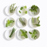 Nine White Dishes Each Containing a Different Fresh Herb Photographic Print by Dave King