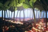 Rhubarb Forest with a Berry Floor Fotografie-Druck von Hartmut Seehuber