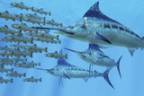 A School of Amemasu Fish Try to Evade Three Large Marlin Predators Posters by  Stocktrek Images