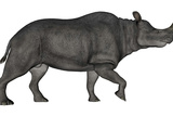 Brontotherium Isolated on White Background Prints by  Stocktrek Images