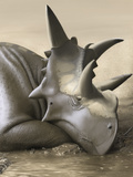 Xenoceratops Foremostensis Relaxing in a Mud Puddle Posters by  Stocktrek Images