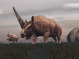 Elasmotherium Dinosaurs Grazing in the Steppe Grass Poster by  Stocktrek Images