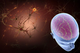 Conceptual Image of Human Brain with Neurons Prints by  Stocktrek Images