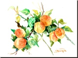 Apricots Stretched Canvas Print by Suren Nersisyan