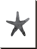 Black Starfish Stretched Canvas Print by  Jetty Printables