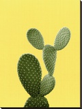 Cactus On Yellow Stretched Canvas Print by  LILA X LOLA