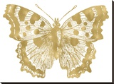 Butterfly 1 Golden White Stretched Canvas Print by Amy Brinkman