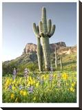 Desert Sentinel 2 Stretched Canvas Print by Murray Bolesta