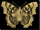 Butterfly 1 Golden Black Stretched Canvas Print by Amy Brinkman