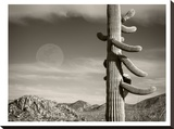 Desert Moon Stretched Canvas Print by Murray Bolesta