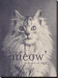 Famous Quote Cat Stretched Canvas Print by Florent Bodart