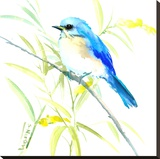 Eastern Bluebird Stretched Canvas Print by Suren Nersisyan