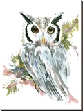 Owl Stretched Canvas Print by Suren Nersisyan