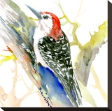 Red Bellied Woodpecker Stretched Canvas Print by Suren Nersisyan