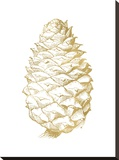 Pine Cone Golden White Stretched Canvas Print by Amy Brinkman