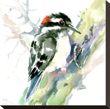 Woodpecker Stretched Canvas Print by Suren Nersisyan