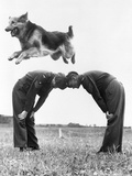 German Shepherd Jumping during Military Training Photographic Print
