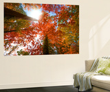 Autumnal Perspective Premium Wall Mural by Philippe Sainte-Laudy