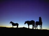 Icelandic Ponies Silhouetted against the Evening Sky Photographic Print by  Arctic-Images
