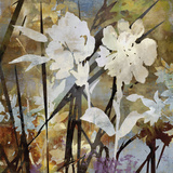 Floral Eclipse II Giclee Print by Paul Duncan
