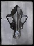 Vertex Giclee Print by Chris Dunker