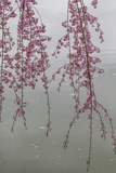 Kyoto Japan 3 Fotodruck von Art Wolfe
