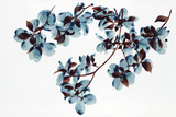 Dogwood Giclee Print by Jackie Battenfield