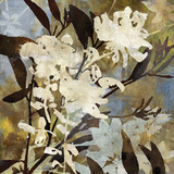 Floral Eclipse I Giclee Print by Paul Duncan