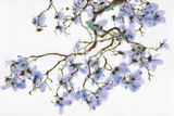 Pale Azure Giclee Print by Jackie Battenfield