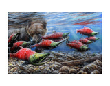 The Last Run - Sockeye Salmon Posters by Kevin Daniel