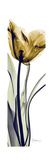 Tall Orange Tulip Premium Giclee Print by Albert Koetsier