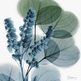 Lilly of Eucalyptus Premium Giclee-trykk av Albert Koetsier