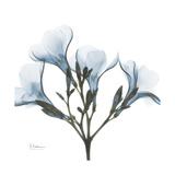 Soft Oleander Premium Giclee Print by Albert Koetsier