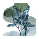 Lilly of Eucalyptus 2 Premium Giclee-trykk av Albert Koetsier