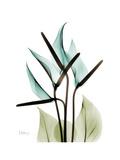 Soft Anthurium Premium Giclee Print by Albert Koetsier