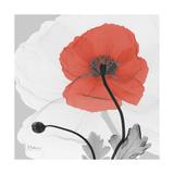 Red Moment Poppy 2 Premium Giclee Print by Albert Koetsier
