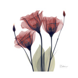 Gentian Trio in Red Premium Giclee Print by Albert Koetsier