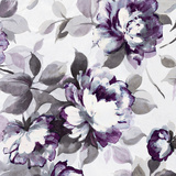 Scent of Roses Plum II Prints by  Wild Apple Portfolio
