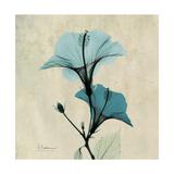 Hibiscus Moment Premium Giclee Print by Albert Koetsier