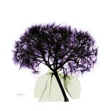 Grape Hydrangea Giclée-Premiumdruck von Albert Koetsier