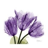 Tulips L63 Exklusivt gicléetryck av Albert Koetsier