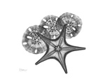 Starfish and Sand Dollar Premium Giclee Print by Albert Koetsier