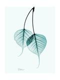 Teal Bodhi Tree Premium Giclee Print by Albert Koetsier