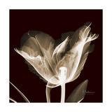 Parrot Tulips 2 Premium Giclee Print by Albert Koetsier