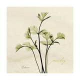 Parsley Moment Premium Giclee Print by Albert Koetsier