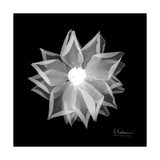 Rose Petals 1 Premium Giclee Print by Albert Koetsier